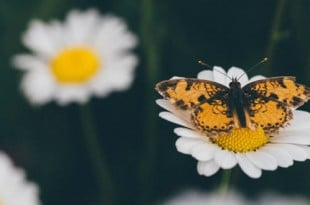 La importancia de la compresión de imágenes en un sitio web